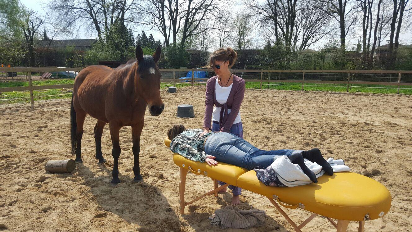 Energetische therapie met paard